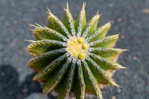 Cactus at Cactus Garden.